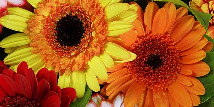 Как дарить цветы в Риге: букет белых роз.