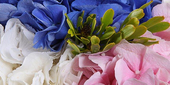 Заказ цветов Рига: самый красивый букет цветов.