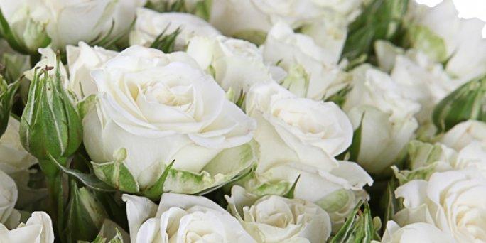 Заказ цветов Рига: Как сделать уникальный подарок коллеге?