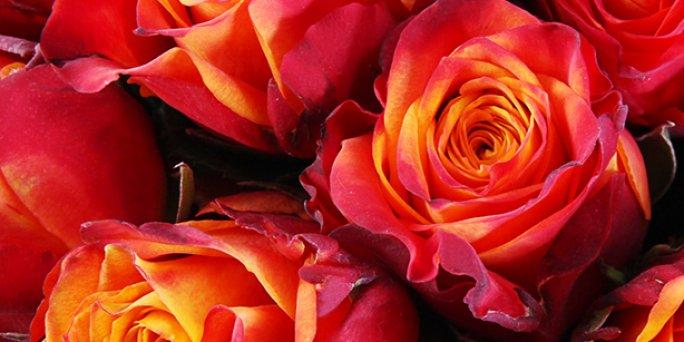 Ищете особенный подарок? Закажите цветы в Риге!