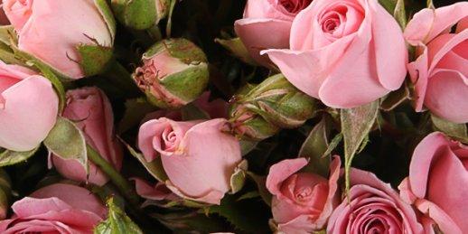 Как купить букет из синих роз в Риге: цены.