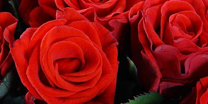 Как покупать цветы в Риге: букеты дизайнерские.