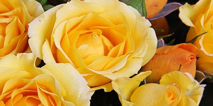 Как купить гигантские розы  в Риге: цены.