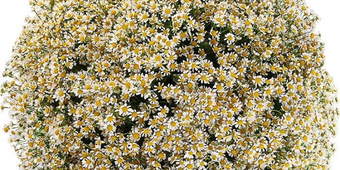 Доставка цветов Рига: Фитодизайн.