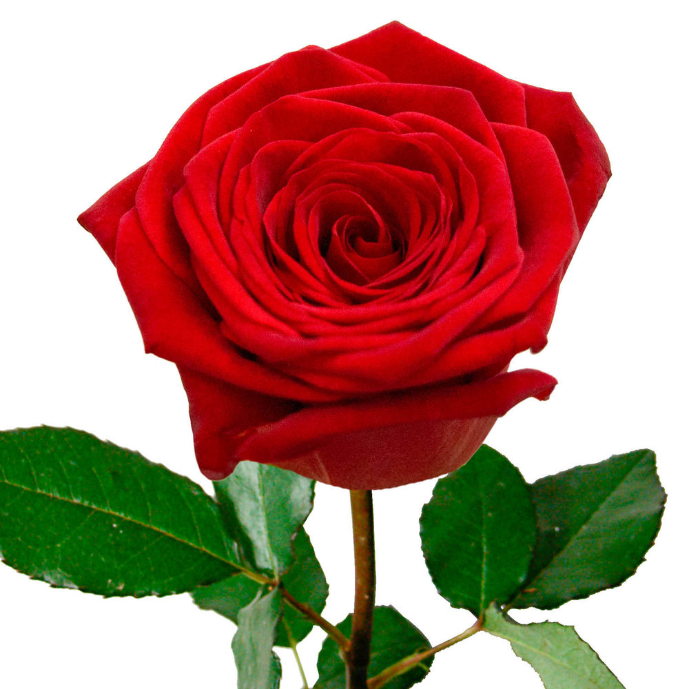 Buy Flowers In Riga With Delivery In Latvia Urgent Flower Delivery