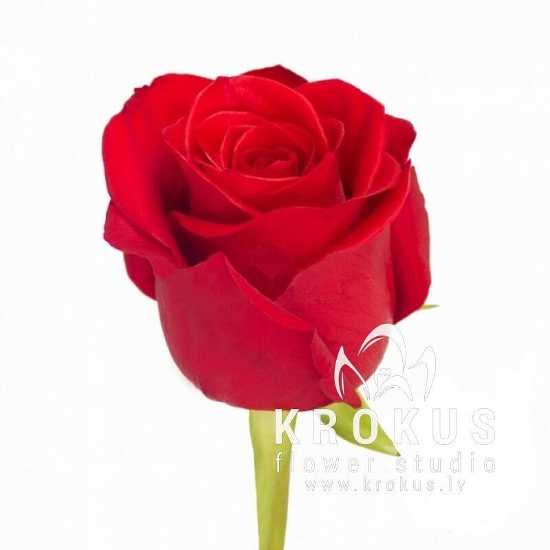 Rose Flower Bouquet Price