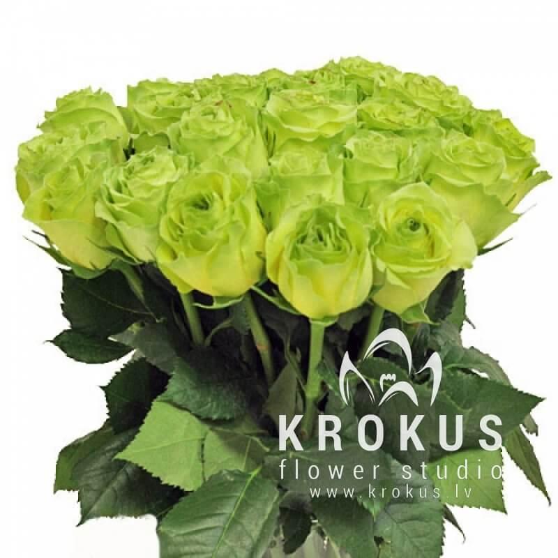 Зеленые роза доставка по украине, грозном оптом цветы